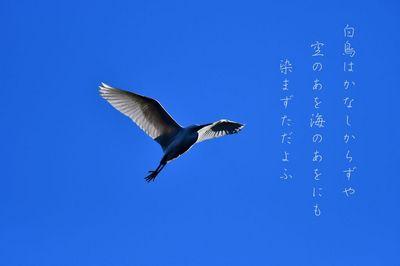 DSC_4982 (2)し.jpg