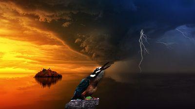 嵐のカワセミ.jpg