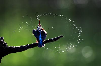 水の星1.jpg